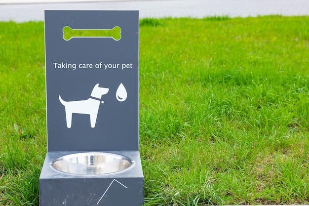 Przenośny poidło dla psów i kotów na zielonej trawie.