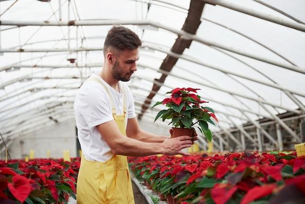 Przenoszenie wazonu z rośliną. portret piękny młody chłopak w szklarni, dbanie o kwiaty.