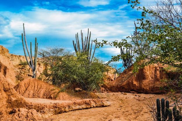 Przepiękna sceneria pustyni tatacoa w kolumbii z egzotycznymi dzikimi roślinami na czerwonych skałach