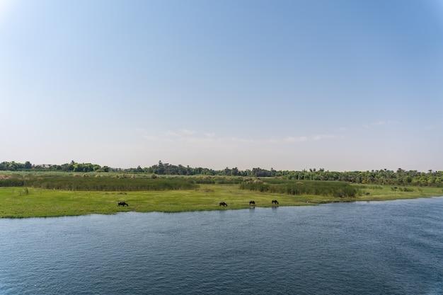 Przepiękne krajobrazy podczas rejsu statkiem po nilu z luksoru do aswer w egipcie