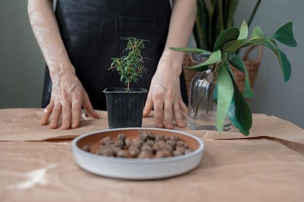 Przesadzaj kwiaty i rośliny w domu lub w kwiaciarni ogrodniczka lub kwiaciarnia pielęgnacja roślin