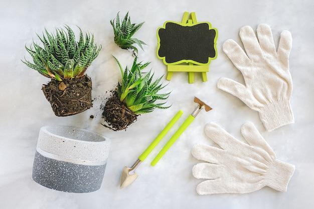 Przesadzanie kwiatów w pomieszczeniach i roślin doniczkowych. kiełki sukulentów, doniczka betonowa, białe rękawiczki, narzędzia i ramka.