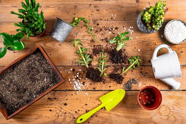 Przesadzanie roślin domowych do doniczek, widok z góry. koncepcja opieki soczyste. zdjęcie wysokiej jakości