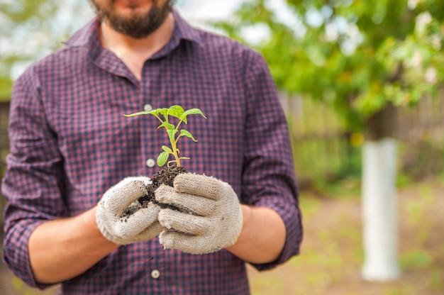 Przesadzanie roślin ilustracja procedur i narzędzi do pielęgnacji roślin domowych.