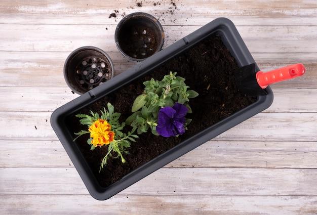 Przesadzanie sezonowych kwiatów na wiosnę