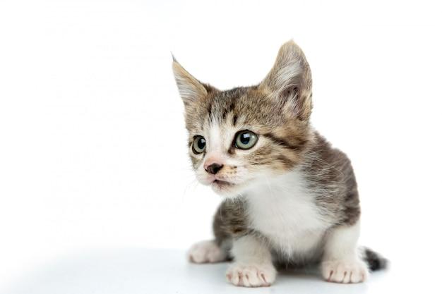 Przestraszony kotek na białym tle