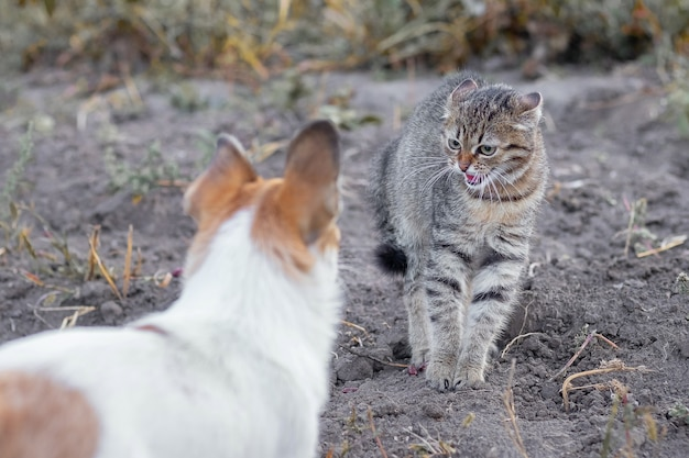 Przestraszony kotek z wygiętym grzbietem w pobliżu psa w ogrodzie