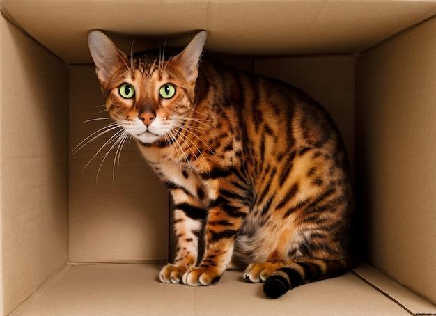 Przestraszony zabawny piękny zabawny prążkowany rudy kot bengalski, bawiący się, chowający się w kartonowym pudełku. zwierzak przenoszący się do nowego mieszkania lub koncepcji strachu dla bezdomnych lub zwierząt domowych