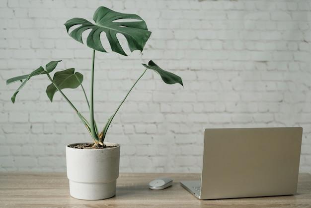 Przestrzeń robocza mordern z rośliną monstera w donicy cementowej, laptopem i myszą