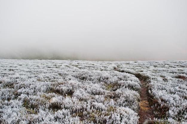 Przetarta ścieżka na zamarzniętej halnej trawie z mgłą na horyzoncie.