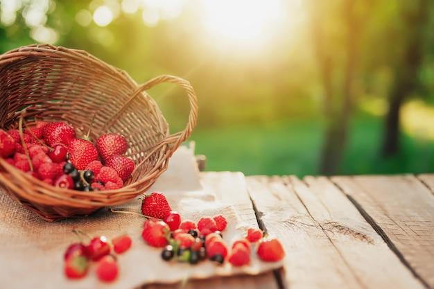 Przewrócony wiklinowy kosz z różnymi jagodami na kawałku materiału na drewnianym tarasie tle w niewyraźne poranne słońce. truskawka, malina, porzeczka, jagoda, wiśnia, czereśnie