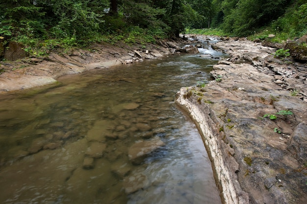 Przez las płyną górskie rzeki. piękny krajobraz karpat z krystalicznie czystą wodą w górskiej rzece.