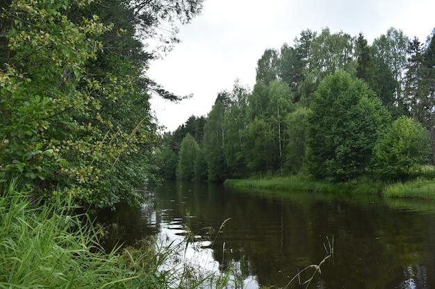 Przez las płynie rzeczka