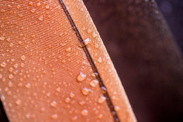 Przezroczysta woda spada na powierzchni brązowego pióra