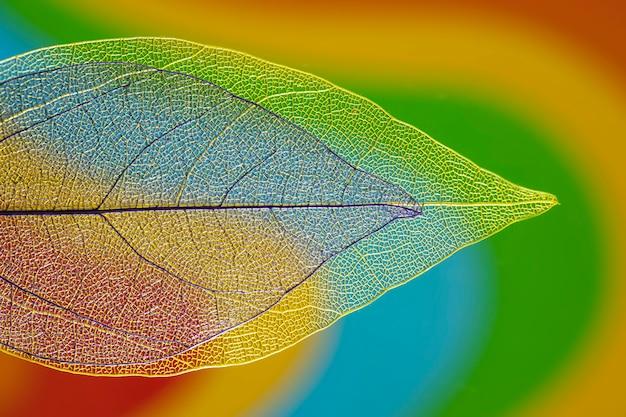 Przezroczyste kolorowe jesienne liście