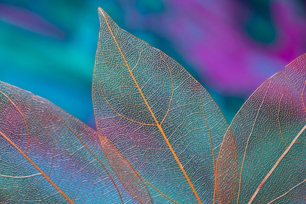 Przezroczyste żywe jesienne liście