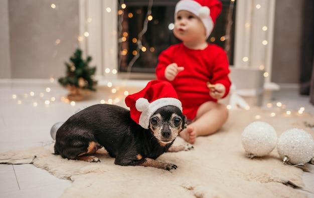Przy kominku w pokoju z dzieckiem siedzi krasnoludzki pinczer w czerwonej świątecznej czapce