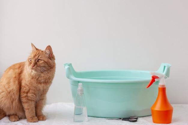Przy miednicy siedzi czerwony, pomarańczowy kot, w pobliżu znajdują się produkty do pielęgnacji włosów. pojęcie pielęgnacji, kąpieli zwierząt.
