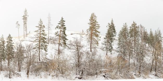 Przybrzeżne Wzgórza Z Rzadkimi Lasami Iglastymi I Liściastymi Premium Zdjęcia