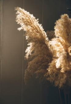 Przyciemniony obraz suszone kwiaty