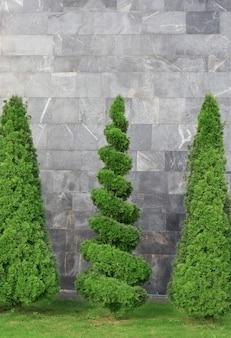 Przycięte drzewa tui na tle szarego kamiennego muru