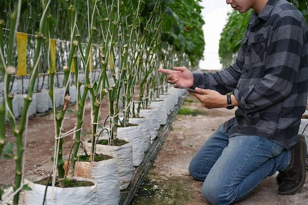 Przycięte zdjęcie inteligentnego rolnika za pomocą cyfrowego tabletu i sprawdzanie wzrostu słodkiej papryki w szklarni.