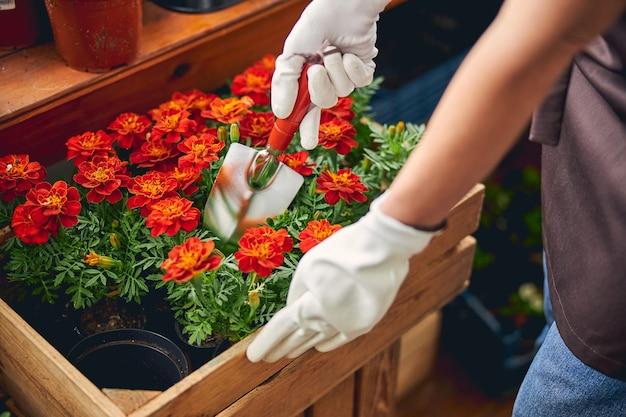 Przycięte zdjęcie kaukaskiej kobiety kopiącej roślinę kielnią z gleby from
