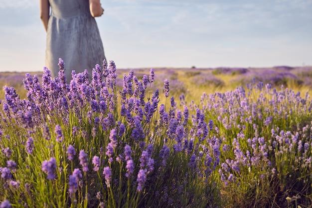 Przycięte zdjęcie nierozpoznawalnej kobiety w sukience stojącej na środku letniej łąki wśród pięknych jasnofioletowych kwiatów lawendy. ludzie, natura. podróże, dzikie kwiaty, wieś i obszary wiejskie
