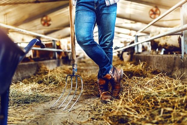 Przycięte zdjęcie rolnika opartego na widłach do siana w stajni. w tle cielęta i krowy.