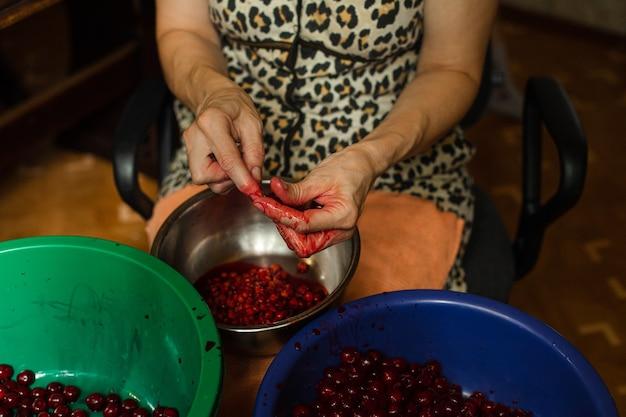 Przycięte zdjęcie stockowe anonimowej kobiety, która po zbiorze zbiera wiśnie w różnych miskach. wiśnie drylowane w niebieskiej misce. zielona miska przeznaczona jest na całe wiśnie.