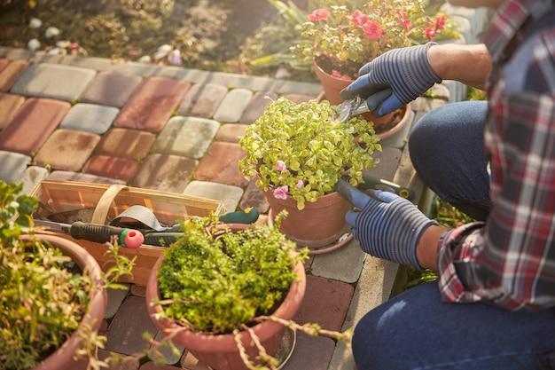 Przycięte zdjęcie troskliwego ogrodnika pielęgnującego swoje rośliny doniczkowe na zewnątrz w słoneczne popołudnie