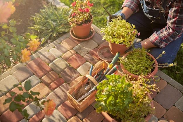 Przycięte zdjęcie umiejętnej kwiaciarni pracującej z roślinami doniczkowymi na zewnątrz w ogrodzie