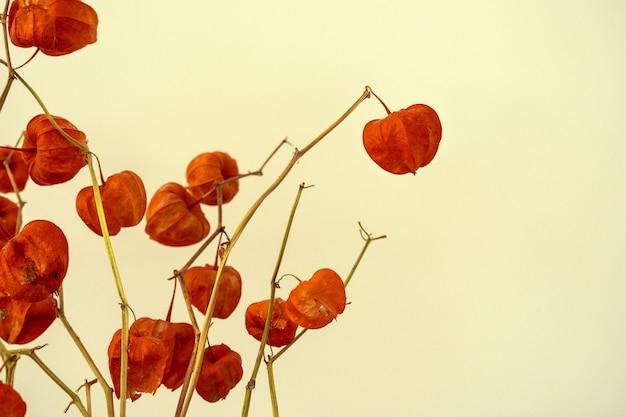 Przycięty obraz dekoracyjnych gałęzi suszonych roślin