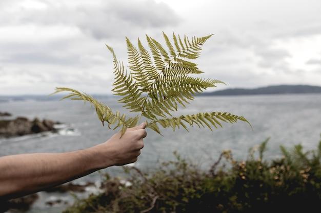 Przycięty obraz dłoni trzymającej liść paproci na tle morza