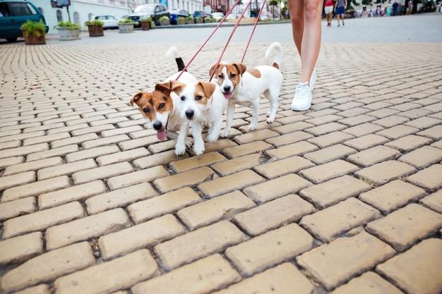 Przycięty obraz kobiety i jej psów podczas spaceru po ulicy miasta