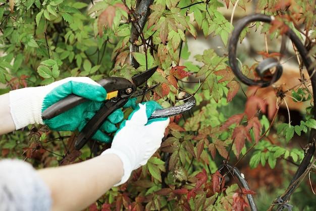 Przycięty widok pracownika ogrodnika noszącego rękawice ochronne podczas przycinania roślin