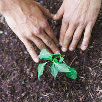 Przycinaj ręce naciskając ziemię wokół srig