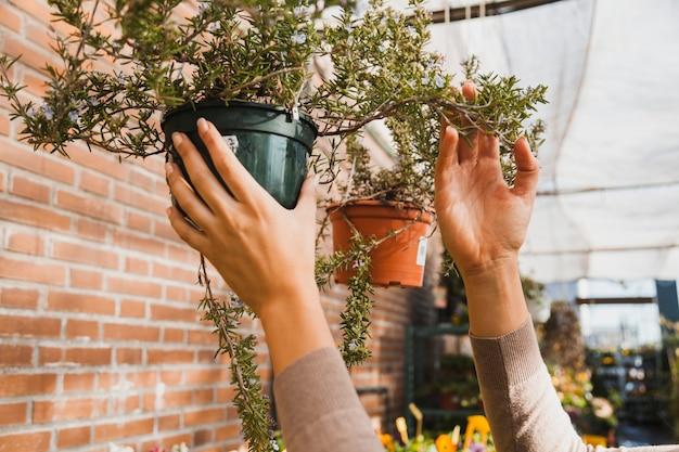 Przycinaj ręce, sprawdzając roślinę