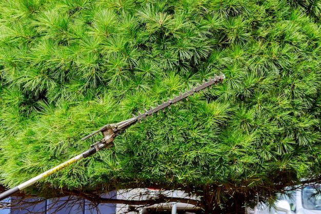 Przycinanie gałęzi działa w ogrodzie, tnie gałęzie i krzewy.