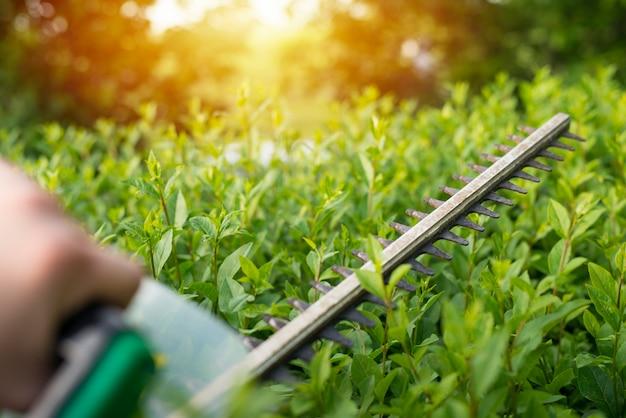 Przycinanie krzewów nożycami do żywopłotu