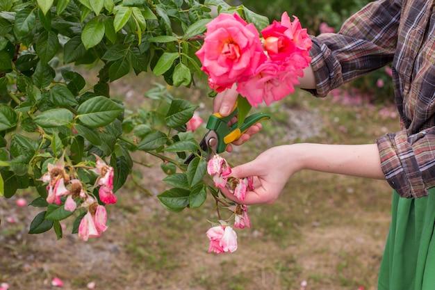 Przycinanie ogrodu