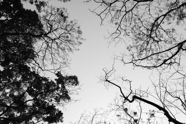 Przyglądający w lesie up - drzewo gałąź natury abstrakt - monochrom
