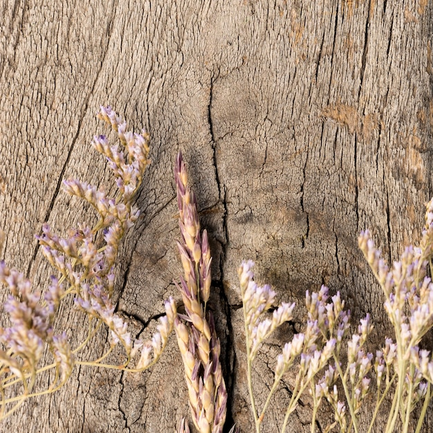 Przygotowania wysuszone rośliny na drewnianym tle