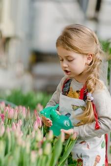 Przygotowanie do wiosennych i wiosennych wakacji. mała dziewczynka kropi tulipany wodne w szklarni.