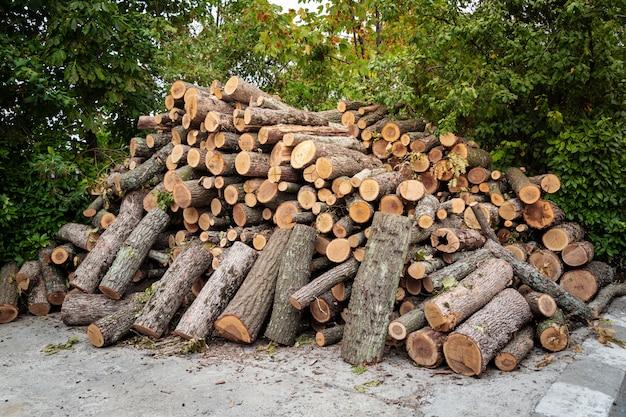 Przygotowanie drewna opałowego na zimę.
