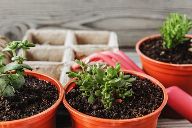 Przygotowanie wiosny do przesadzania roślin. garnek, łopata, sukulenty