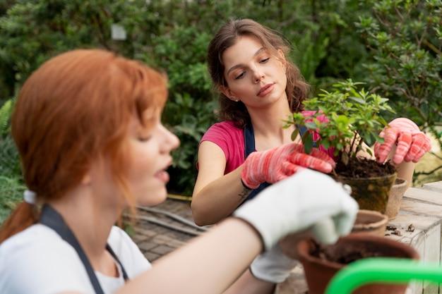 Przyjaciele dbający o swoje rośliny w szklarni