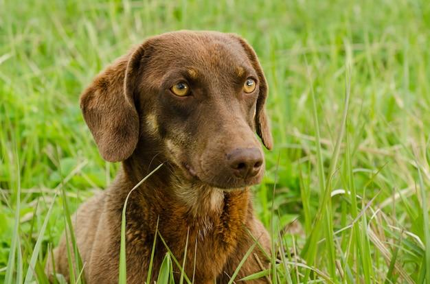 Przyjazny pies o żałosnych oczach, z bliska