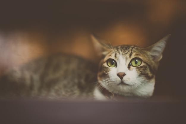 Przyjęty kot domowy jako zwierzak domowy, słodki kot w domu, zbliżenie kocia twarz, urocza kotka, odosobniony, kotek portret. bezdomny kot.