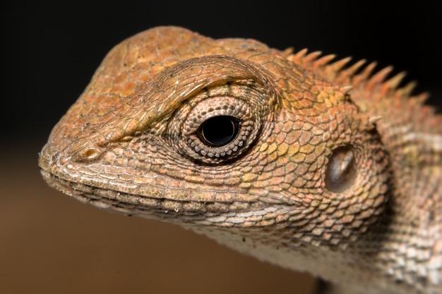 Przyjrzyj się kameleonowi